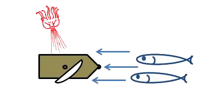 [ img - raft+fish1.png ]